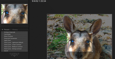 A picture of the Develop view, when cropping an image